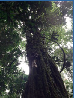 Ciebo Trees over 450 years old, global education magazine
