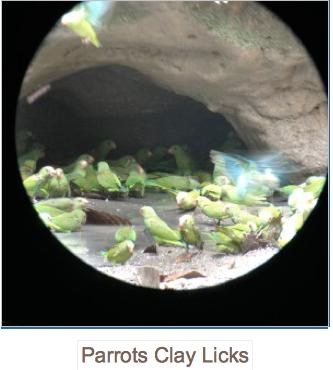 Parrots Clay Licks, global education magazine,